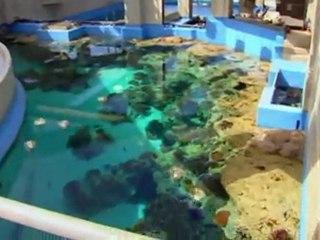 Discovery.channel.man.made.marvels.okinawa.aquarium.hdtv.xvid-logies
