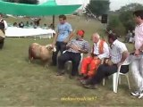 Darıözü Köyü Göllü Yaylası 1.şenlik Ağası Yeter Cebeci 2011