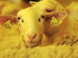 La Tapisserie d'Aubusson / Felletin dans la Creuse : Du mouton au fil...
