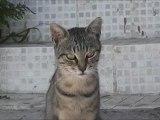 Sokak hayvanları yaşam hakkı  www.kumanda.org