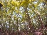 VTT dans la forêt de Montmorency