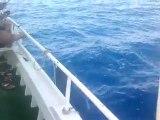 hakan ilhan söğüt mercan balık avı