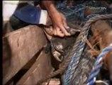 Filippine, trovato coccodrillo di 6.4 metri
