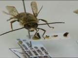 Le mystère de la disparition des abeilles