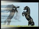 Portrait du cheval Frison