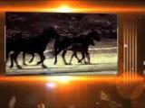 Trotting SARL-Matériel chevaux Centre