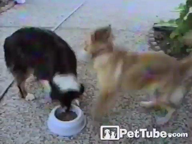 Dogs Sharing Dinner