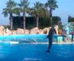 Le Spectacle des dauphins de Marineland septembre 2011