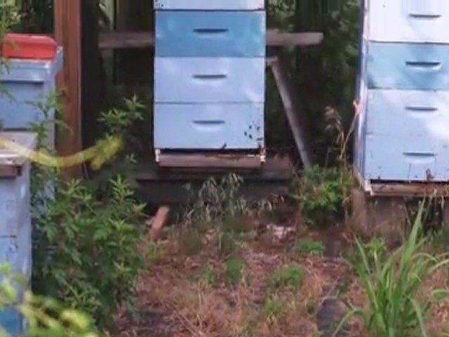 [Vimeo-29419200] Bee Aware