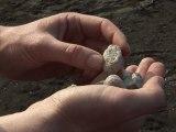 Les Manips de Volcan Terre d'Eveil - Les roches volcaniques : les pierres ponce