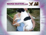 Mange Busters | Dogs with Mange | Home Remedy Dogs with ...