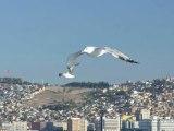 uçun kuşlar uçun izmir'e doğru..
