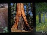 DVD MUSIQUE CLASSIQUE PICTURES Jean-Luc Pouchet The Jean-Luc Pouchet Collection MPS ... http://www.blogg.org/blog-93581-billet-1321317.html