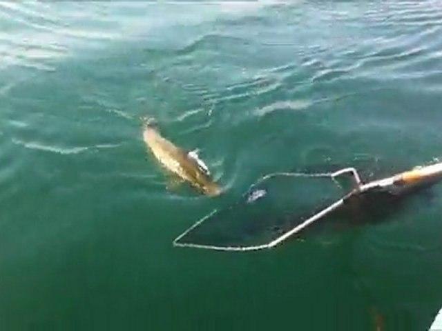 Pêche à la traîne d'un brochet en Savoie sur le Lac du Bourget 73