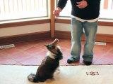 Information chien Comment apprendre le rappel a son chien