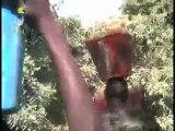 Jardin fruitier SUR TCHADONLINE