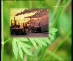 Bitkilerdeki Yaprak Mucizesi Bitkilerdeki Fabrika Nasil Calisiyor