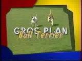 reportage bull terrier