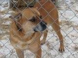 NIK o schroniskach dla zwierząt: Tragiczna sytuacja