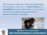 Guía de Entrenamiento Canino y Entrenamiento de Perros