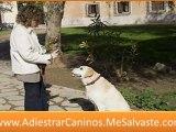 Adiestramiento perros - adiestramiento canino