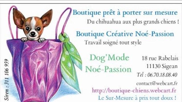 Vidéo Boutique Chiens Noé-Passion