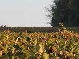 Randonnée VTT dans les vignobles près de Château Thierry