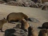 namibie-otaries-skeleton-coast