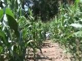 Labyrinthe de maïs, Pop corn labyrinthe - Morbihan, Bretagne