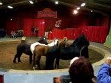 Liberté chevaux