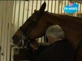 Equitation - Comment brider un cheval ?