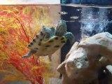 mes aquarium a tortues