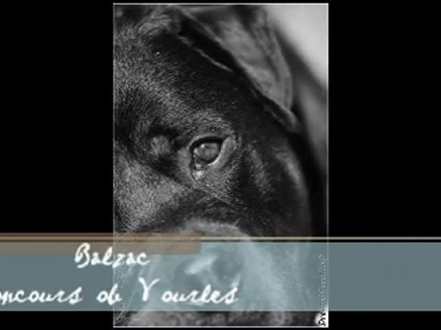 rottweiler – concours obé vourles – balzac
