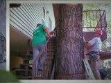 Austin Tree Service|Austin Tree Removal|Austin Tree Trimming