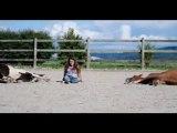 Isabelle Beuret - La Caresse du cheval - travail en liberté