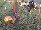 Matinées canines Meaux, socialisation chiens