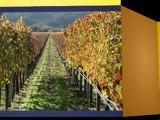 Dom Perignon Champagne for Special Events