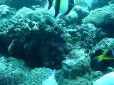 Anémones et poissons clowns