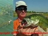 Pêche du black bass aux leurres souples Ecogear sur le Lez par Europêche34