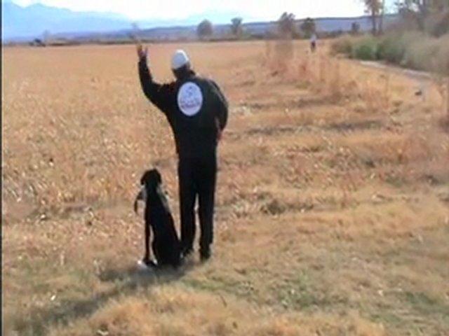 Dog Marking Drill Training – Dog Training Tips