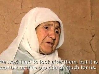 Christian Aid: Women farmers in Afghanistan