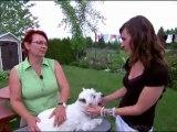 Un amour de chien présente mes Westies 2011