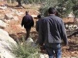 Palestine - Commerce équitable : la coopérative d'huile d'olive PFTA