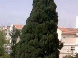 "0420101421.3g2 יום העצמאות תש""ע אצל משפחת מאיר cypress"