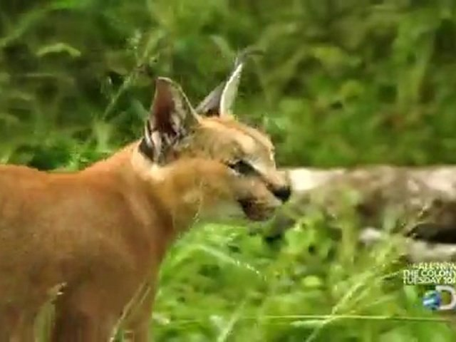 Discovery Channel Speed of Life Part 115 [HD]