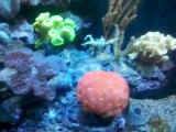osaka reef tank , osaka 260 en aquarium recifal