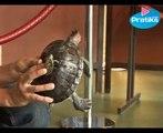 Tout savoir sur les tortues de Floride ou tortues d'aquarium