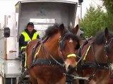 mon beau cheval, roi des sapins (Pont-Sainte-Marie)