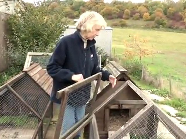 How To Protect Chickens From Foxes