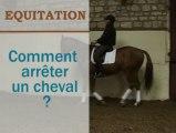 Equitation - Comment arrêter un cheval